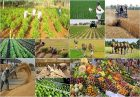 حمایت از رشد تولید محصولات اساسی کشاورزی اقتصاد مقاومتی